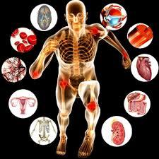 Anatomy & Physiology II